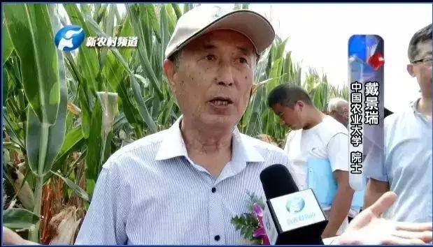 2108年国家黄淮海区玉米新品种核心展示观摩活动圆满落幕