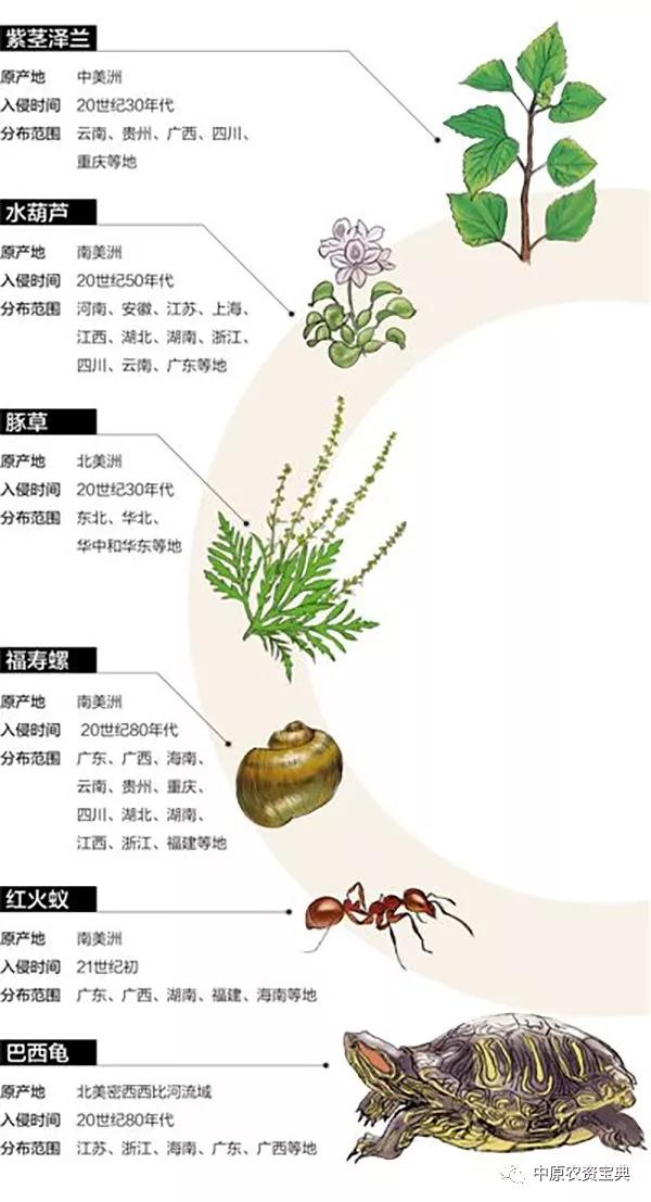 【警惕】外来物种登陆中国:超50%有害植物系人为引种导致传入