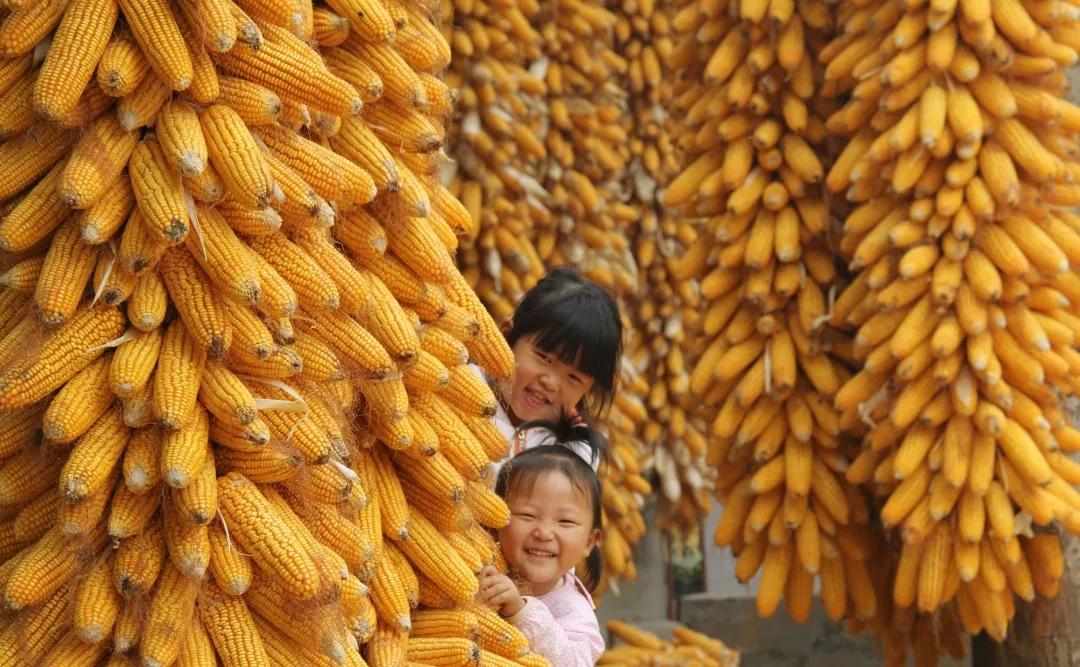 【注意】中国玉米市场发生一件大事!