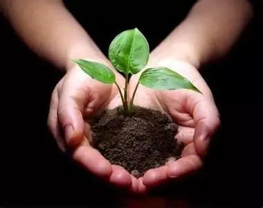 【注意】被化肥农药毁掉的土壤!