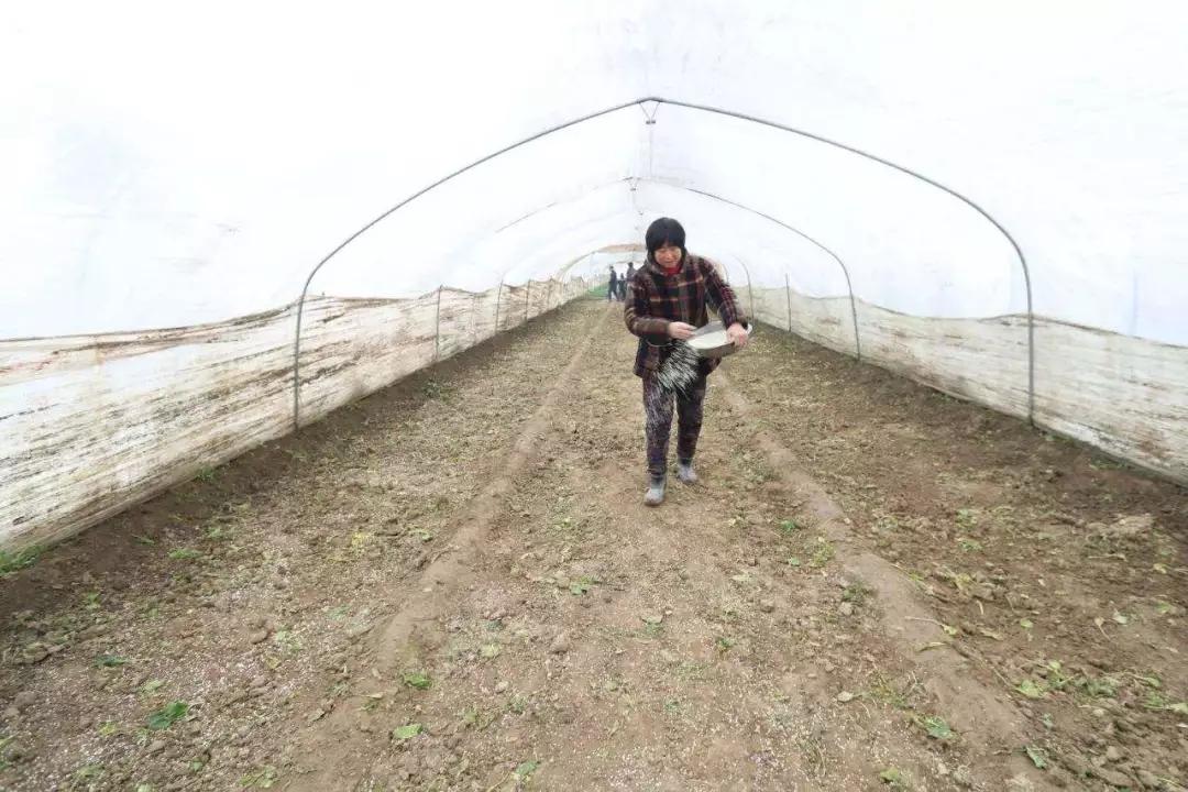 """【警醒】开春用肥高峰期,13种肥料上的""""禁忌""""要明晰!"""