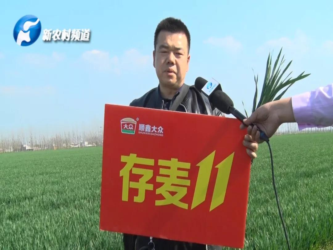 【名企】选好种,放心种!—河南顺鑫大众种业存麦11春季回访
