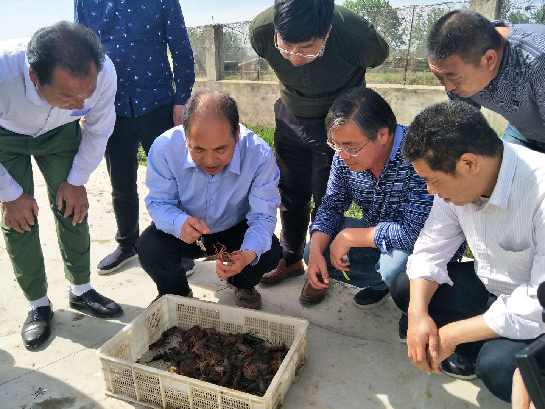 """河南省""""四优四化""""科技支撑行动计划——稻渔综合种养技术示范与推广项目。"""