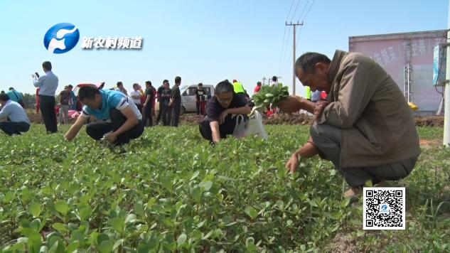 发展新型特色乡村农业,助力农民脱贫致富