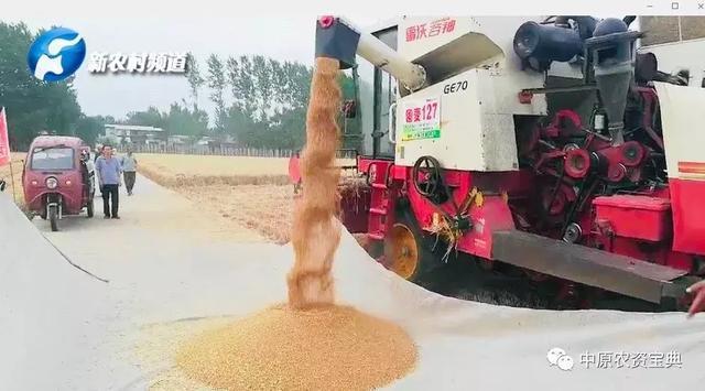 亩产高达801.6公斤!囤麦127、囤麦257在漯河掀起高产风暴