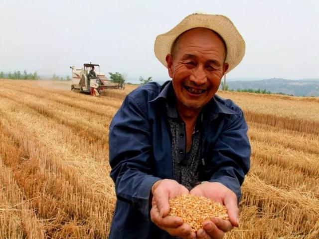"""""""一停一收""""两大利好,""""造福""""种粮农民、pinnacle平博贩子与贸易商"""