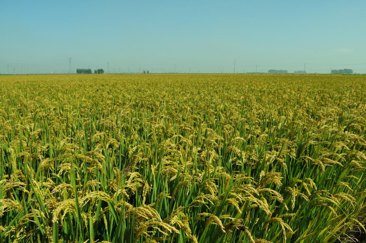 传来2个重大利好消息,年后玉米涨价有戏?