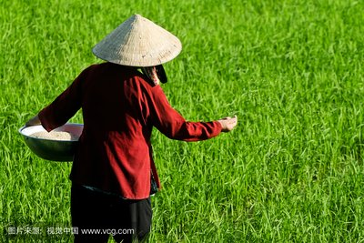 市场没有后悔药,之前报价已无效!哪些化肥、农药价格或将暴涨?