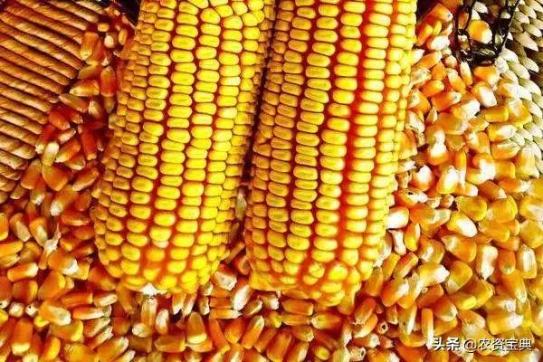 """四月""""开门红""""!国内玉米价格全面上涨!较去年上涨141元/吨!"""
