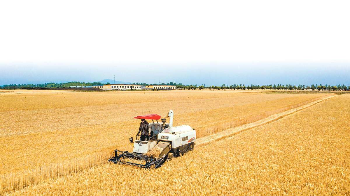 麦收高峰期,你离高产只需一步!揭秘竞技宝IOS、玉米、花生等高产秘诀