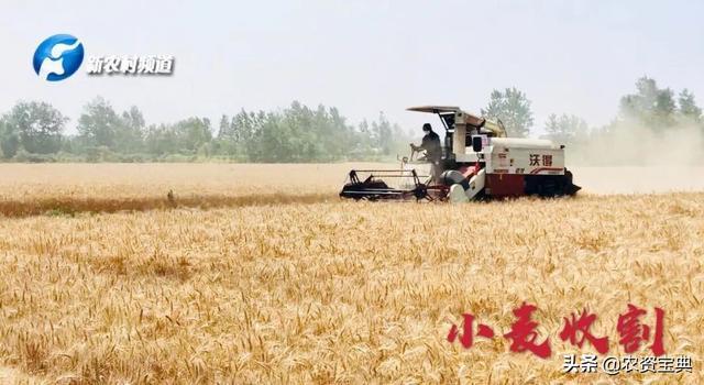 河南已收获竞技宝IOS面积8209万亩,各地新麦收购价格有变化