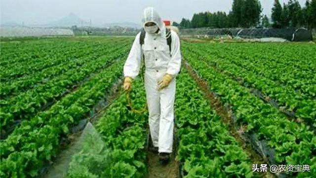 """除草剂和杀虫剂混合使用,玉米却死了?一定要避开这些""""雷"""""""