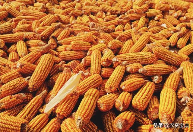 """7月第一天,玉米的""""疯狂之路""""还能持续多久?"""