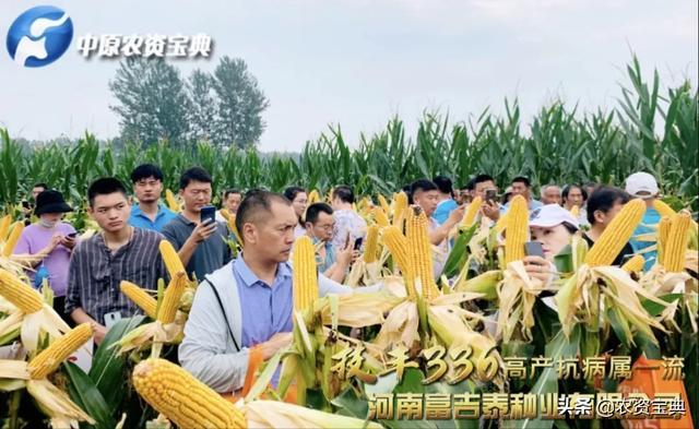 """一场观摩,订购一空!""""罕见""""玉米品种亳州""""开挂"""",一路走红"""